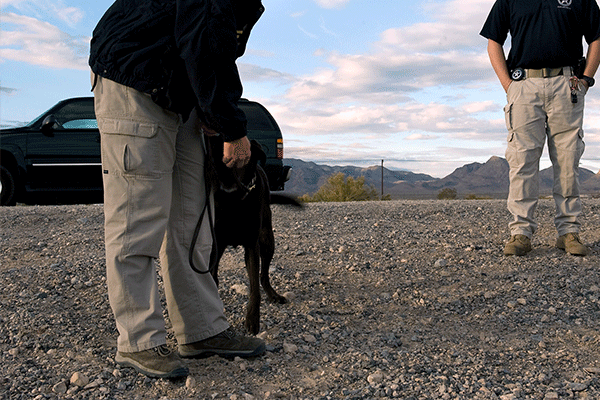 Tracking Dogs to Find Your Pet
