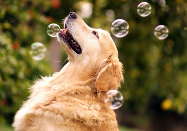 Dog Catching Bubbles