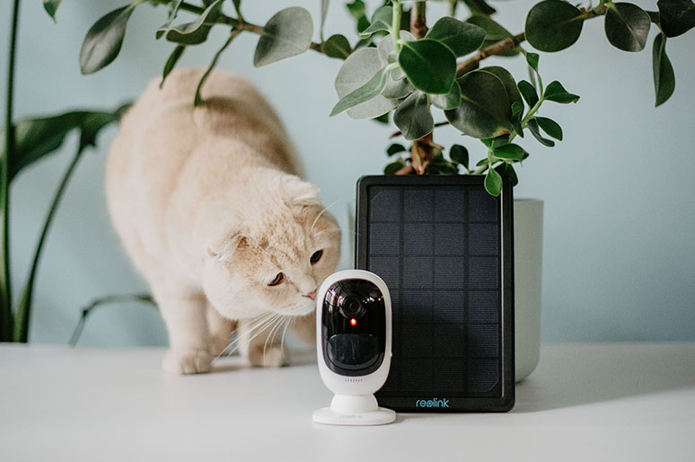 Cat and IP Camera