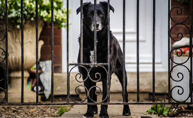 Guard Dog for Empty Nester
