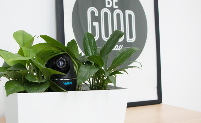 Reolink C1 Pro Hiding in the Plant