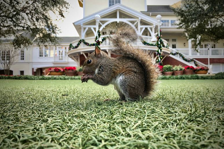How to Get Rid of Squirrels in the Attic & Garden: 17 Most Effective Solutions