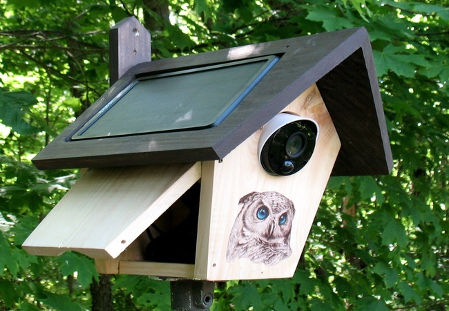 Battery Powered Security Cameras in Birdhouse